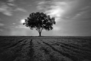 tReE'ky by LenScapist