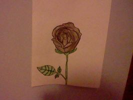 Drew a rose by haileebailee123456