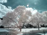 Infrared X by ilimel