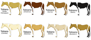 Tobiano Patterns by amour-doux