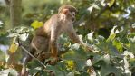 Squirrelly Monkey Business. by Rabid-Coot