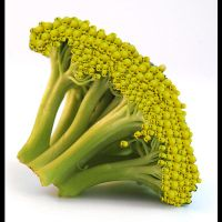 brocoli babys by butterflycollector