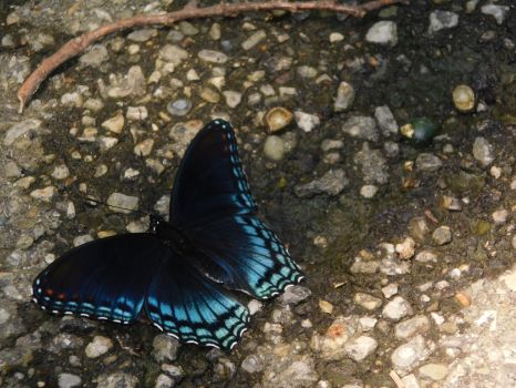 Butterfly on the Path by Jyl22075