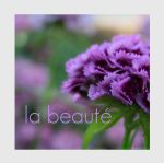 la beaute by Lisa-Schneider