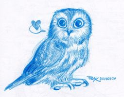 Saw Whet Owl by PsychedelicMind