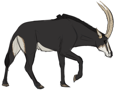 Antelope Sketch by wise-crack