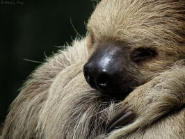Sleepy Sloth by brittanyfay