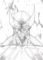 Wolverine-Doodle in the Lib by Joe-Style