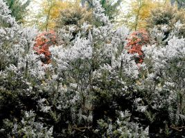 Large Ericaceous Shrub Stereo, Palette Knife Rehue by aegiandyad