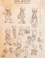 Sonic Anatomy: Body proportions by FOX-POP