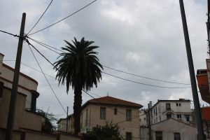 palm and houses algeria by dimajaber