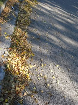 Leaves scatter the street by Teiyuo