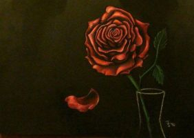 Red rose by snakehands