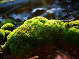 Moss 1 by georgmaxklein