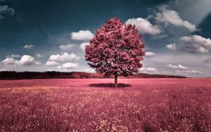 pink tree by demor