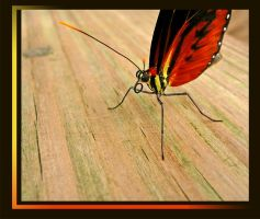 Neato Mosquito Butterfly by Lidusha