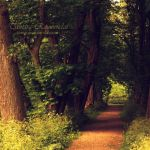 Whispering Forest by TammyPhotography