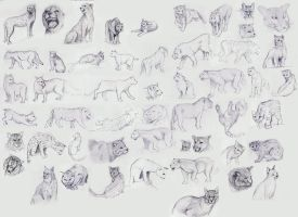 Cat Study by JordanStoddard