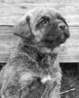 INKA my puppy by Angeliqueperrin