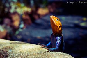 AgamA by AbstractLogicPattern