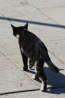 Cat Stock 21 by Malleni-Stock