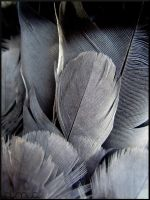 Feathers by Octoux