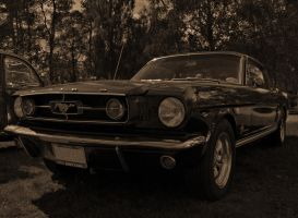 Mustang by SunDwn