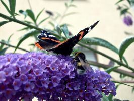 bumble-bee  meets butterfly by freakyynicole