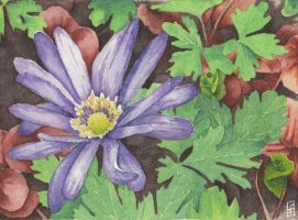 Purple Anemone flower - Aquamarkers by GeeMassamArt