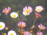 Blurry Flowers by staceymaii