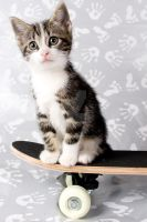 skateboarding Frodo by PhotoGraphChick