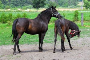 Mare and its Colt by gmacd1129