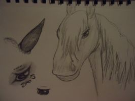 Horse Sketches by 6-9Changeling