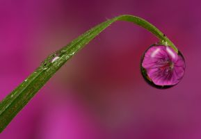 Dew Drop Refraction 20 by Alliec