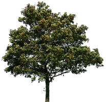 tree 34 png by gd08