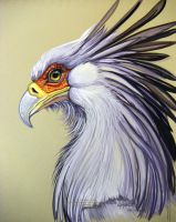 Secretary Bird 2 by HouseofChabrier