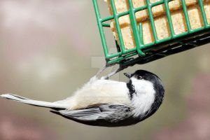 Chickadee - 2 by creative1978