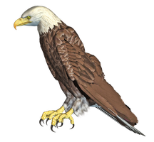 Eagle 05 PNG Stock by Roys-Art