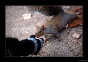 Curious Squirrel by AmbientExposures