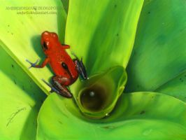 Strawberry Poison Frog by AmBr0