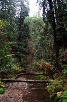 Muir Woods by Toefje-Kunst