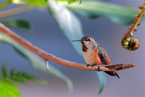 Guarding the Nest by clippercarrillo