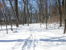 622 - snow trail by WolfC-Stock