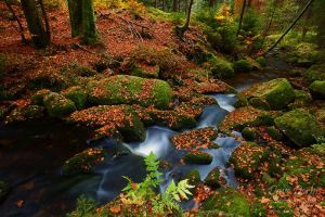 Bode Autumn by Dave-Derbis