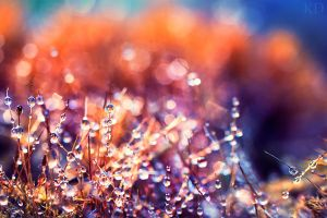 wet moss. III by Altingfest