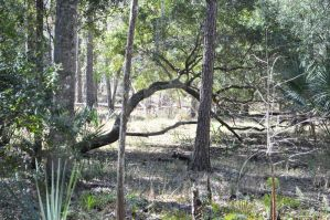 Shingle Creek 030 by adementedchief