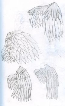 Four different types of wings by max506210