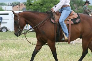 Quarter Horse Stock 77 by tragedyseen
