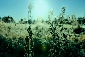 Frosty Morning Landscape On October 24  by eskile