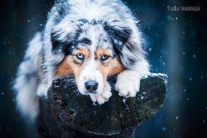 Let it snow by aussiefoto